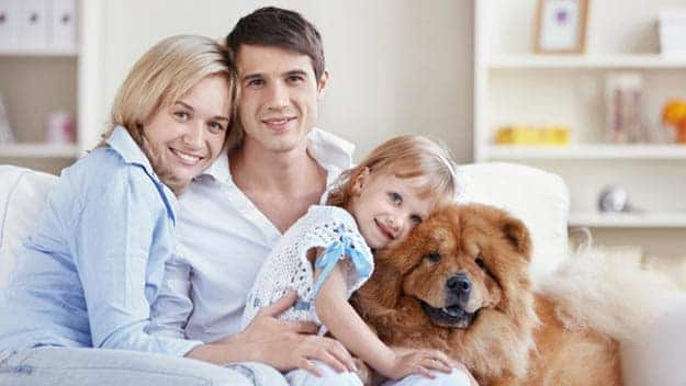 Wills & Trusts dog-young-family Direct Wills Stratford Marsh